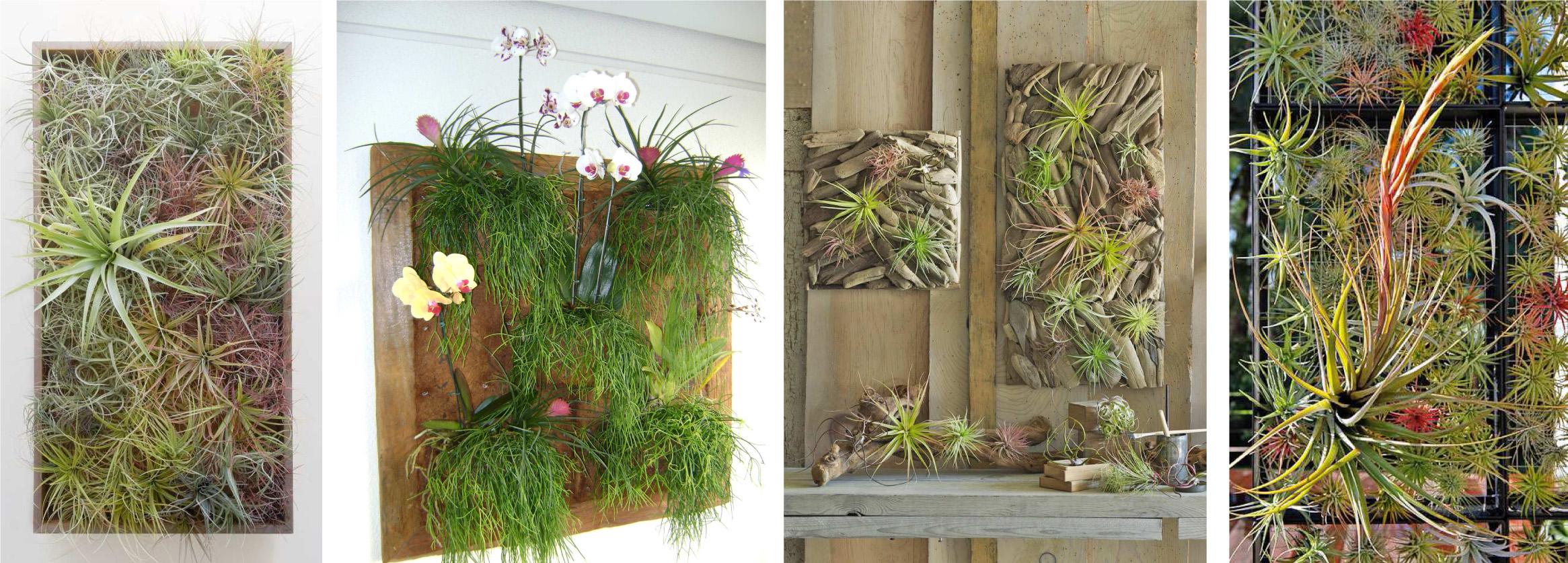 Plantas ep fitas para los jardines verticales paivertpaivert - Plantas para jardines verticales ...