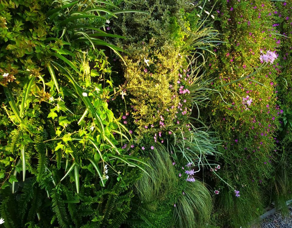 Plantas sedum para los jardines verticales paivertpaivert - Plantas para jardines verticales ...