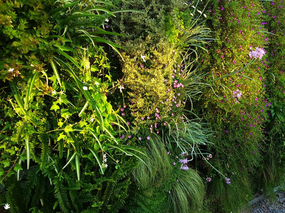 Plantas sedum para los jardines verticales paivert - Jardines verticales plantas ...